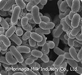 本来備わる健康力をサポートする『シールド乳酸菌』